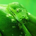Fear of Snakes Phobia - Ophidiophobia