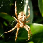 Fear of Spiders Phobia - Arachnophobia
