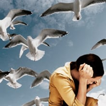 Fear of Birds Phobia - Ornithophobia