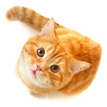 Fear of Cats Phobia - Ailurophobia or Gatophobia