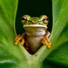 Fear of Frogs Phobia - Ranidaphobia