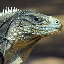 Fear of Reptiles Phobia - Herpetophobia