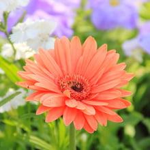 Fear of Flowers Phobia - Anthophobia