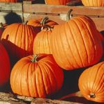 Fear of Pumpkins Phobia – Cucurbitophobia