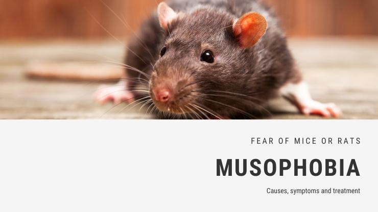 Musophobia